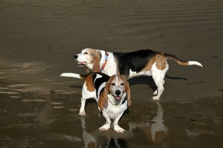 Beachhounds